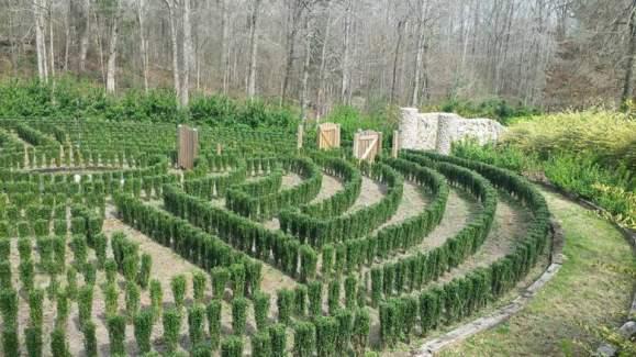 rose-maze
